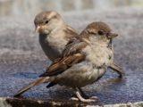 Jak pomagać zimującym ptakom?